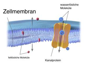Zellmembran